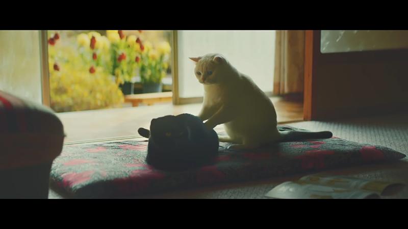 超治愈——有生之年一定要养只猫系列