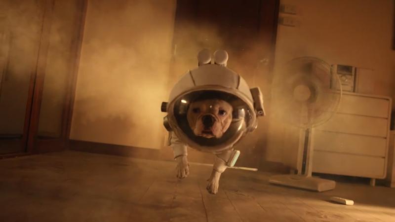 想知道你的房子在狗狗眼中是什么样的吗?